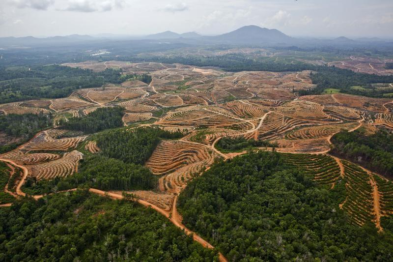 Piantagione di olio di palma in Central Kalimantan