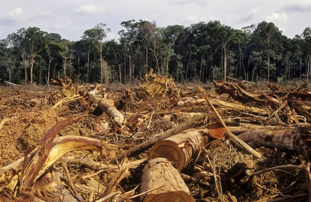 deforestazione-palma