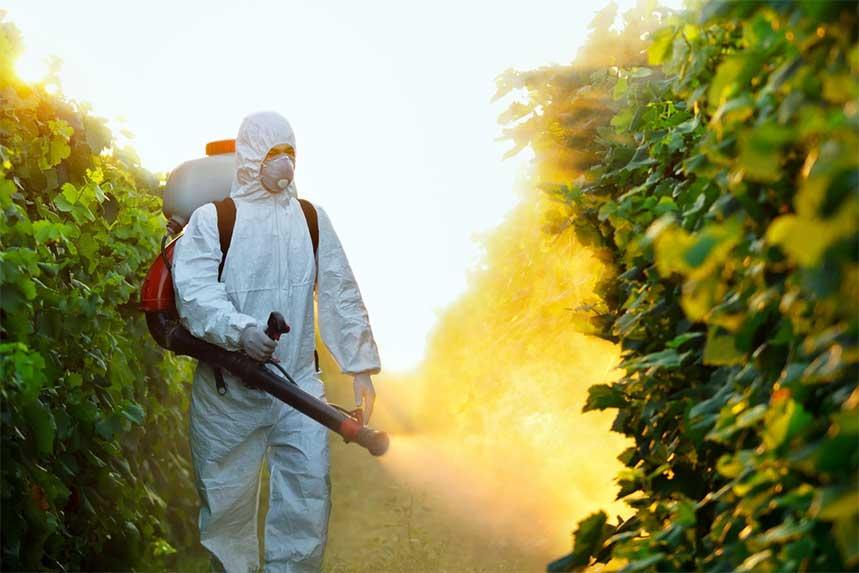 Pestici-1