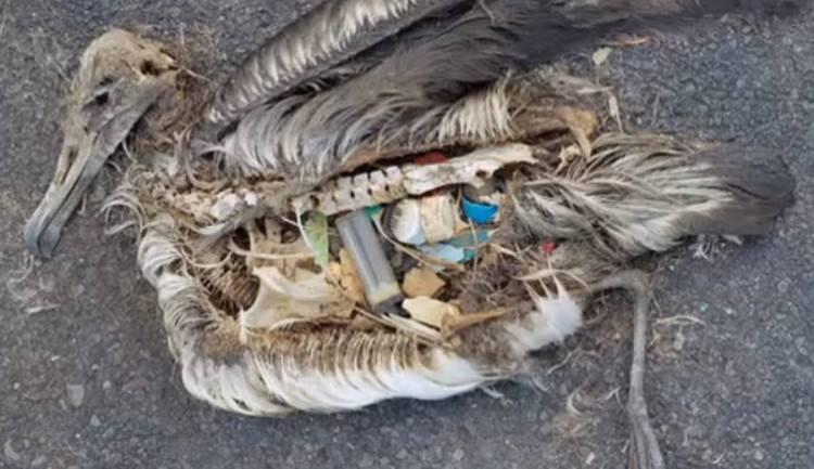 inquinamento mare (4)