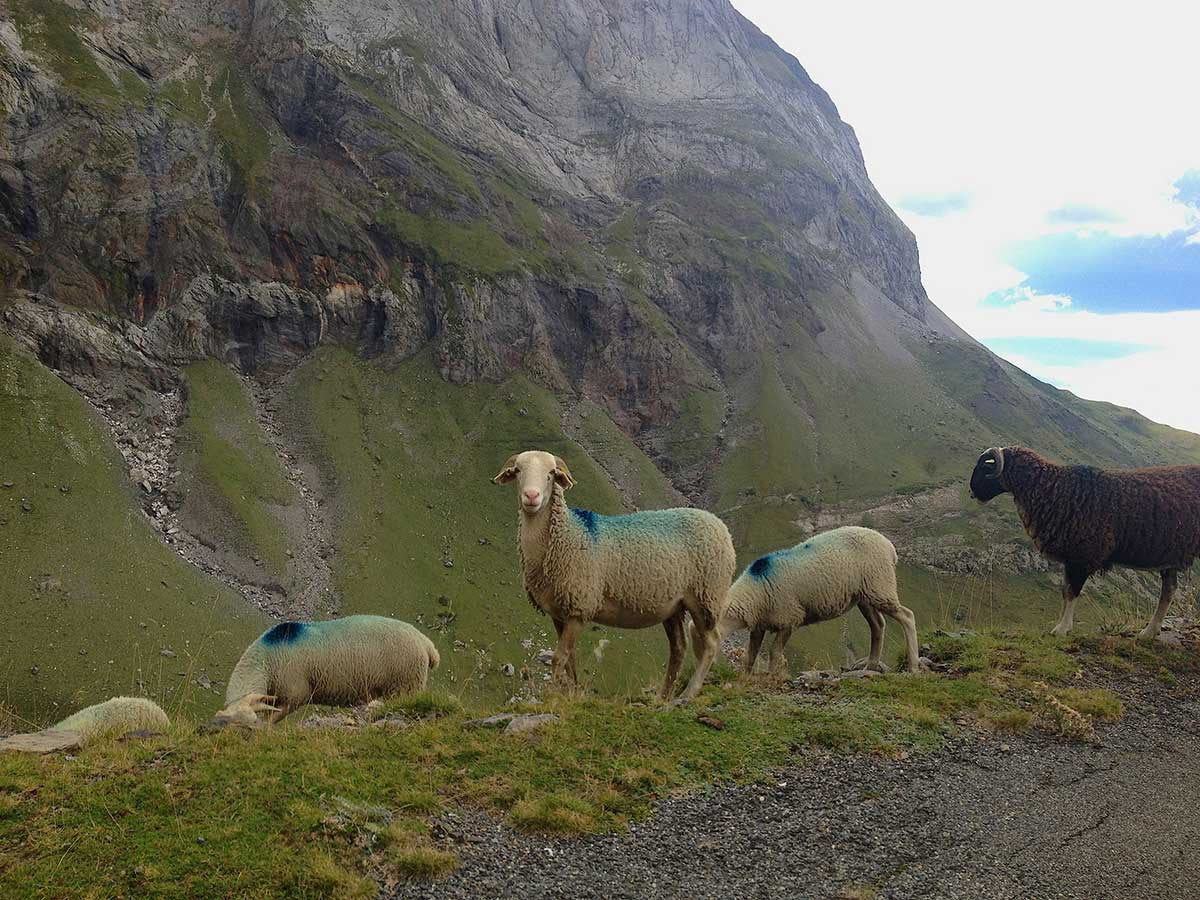 2014-09-16-17.07.45-sheep-Troumouse