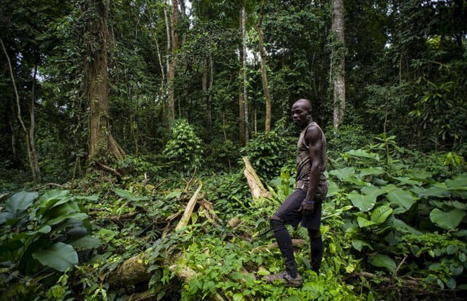 A_landscape_picture_from_Cameroon___CIFOR_Forests_News_Blog