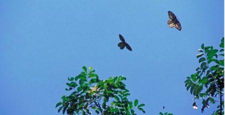La regina delle farfalle e la politica di conservazione -Vulcano Statale