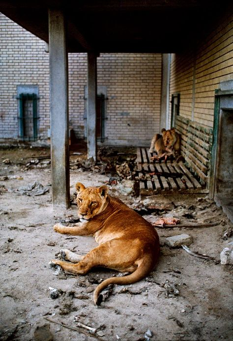 Steve McCurry, Animals in mostra al Mudec -Vulcano Statale