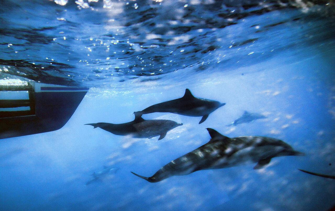 Gli oceani dicono basta al rumore umano