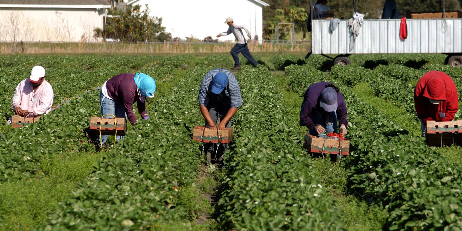 L'impatto della pandemia sull'immigrazione