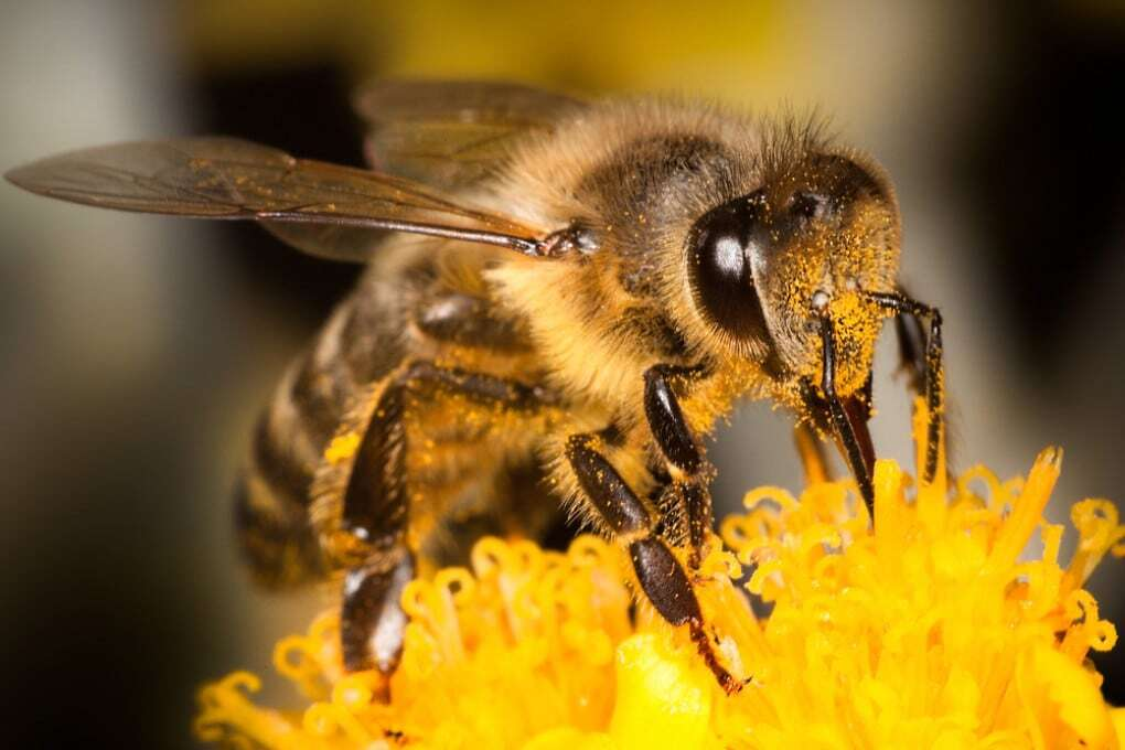 Le api: da Platone al 2021