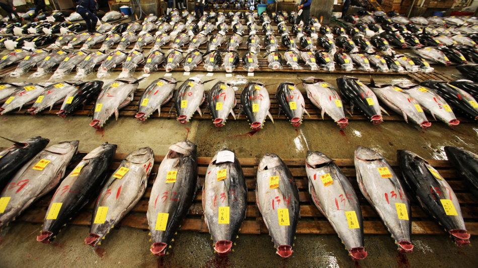 Quanti pesci ci sono nel mare vulcano statale for Quanti senatori ci sono