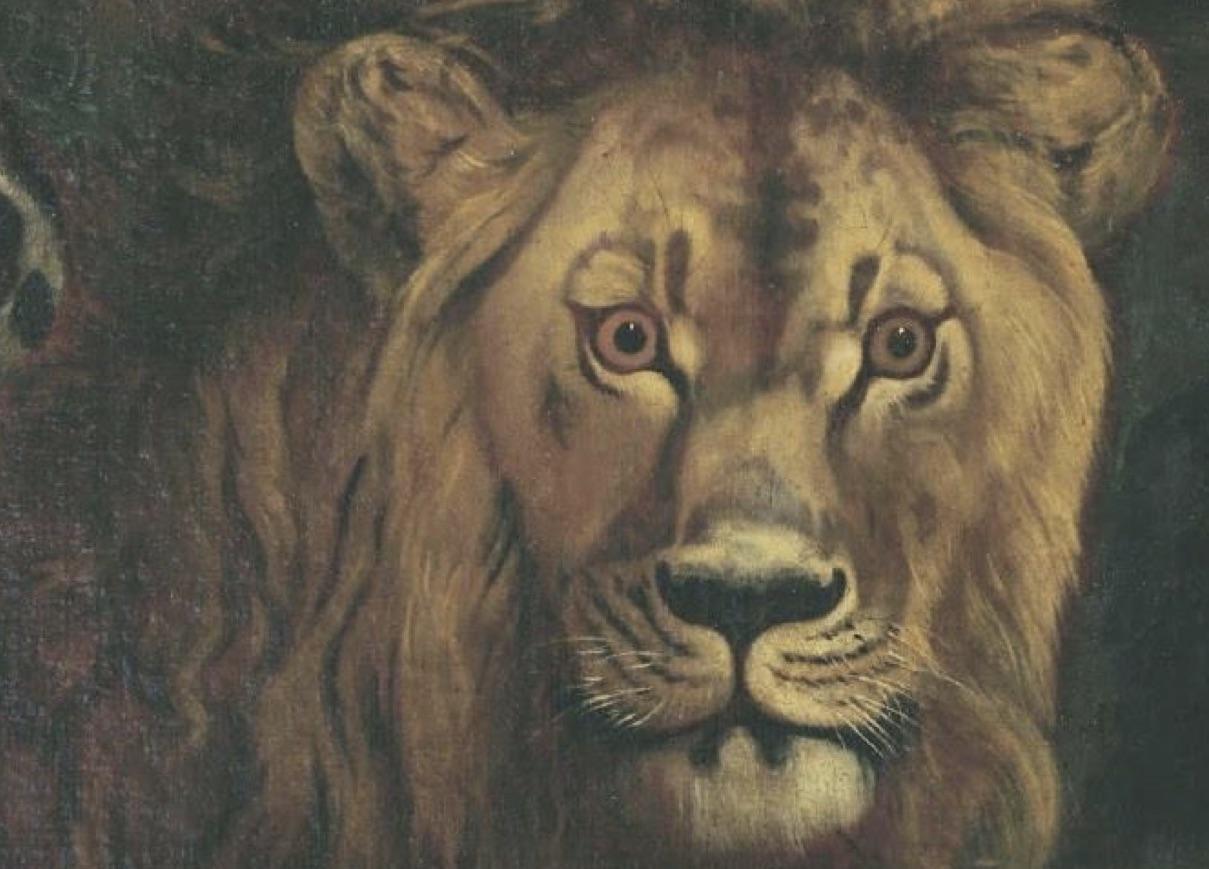 Il meraviglioso mondo della natura in mostra a Palazzo Reale -Vulcano Statale